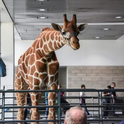 Tiny the Giraffe